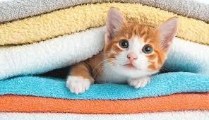 Как да изперем правилно хавлиените кърпи